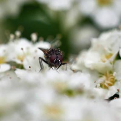 Photograph - Look Of The Fly by Jouko Lehto
