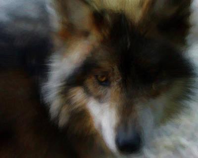 Canine Digital Art - Look Of The Wolf by Ernie Echols