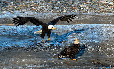 Photograph - Look Out From Above by Shari Sommerfeld