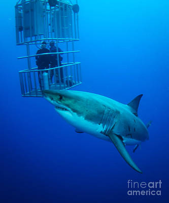 Cage Dive Photograph - Look Out by Ryan Ware
