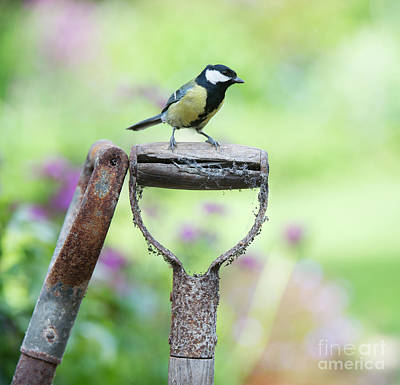 Titmouse Photograph - Look Out by Tim Gainey