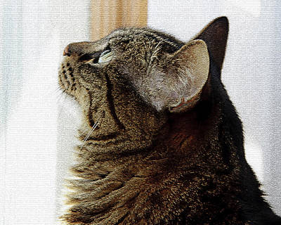 Cats Photograph - Look Out Window Tabby Cat by Andee Design
