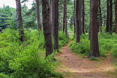 Photograph - Look Park Nature Path by Sven Kielhorn