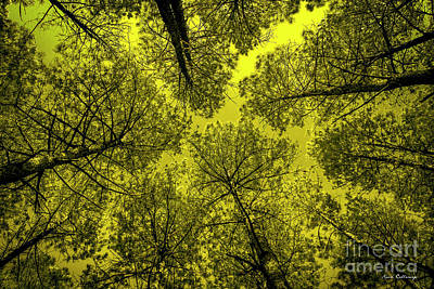 Photograph - Look Up 2 Tall Pine Tree Art by Reid Callaway