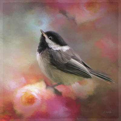 Photograph - Look Up Above - Bird Art by Jordan Blackstone