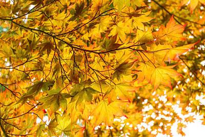 Look Up And Enjoy The Brilliant Autumn Colors Print by Georgia Mizuleva