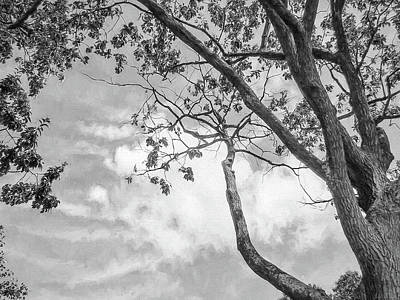 Photograph - Look Up Into The Sky by John Rivera