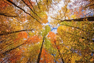 Photograph - Look Up by Peg Runyan