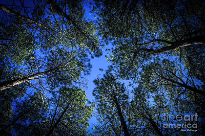 Photograph - Look Up Tall Pine Tree Art by Reid Callaway
