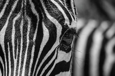 Photograph - Looking At Me - Bw by Teresa Wilson