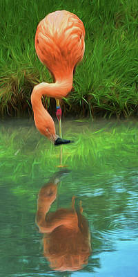 Photograph - Looking At Me - Flamingo by Nikolyn McDonald