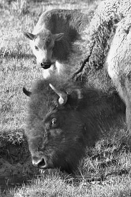 Photograph - Looking At My Baby?  Black And White by Adam Jewell