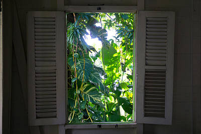 Photograph - Looking At Philodendron Through The Window by Daniel Jean-Baptiste
