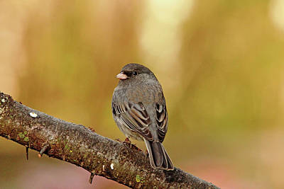Photograph - Looking Back At You by Debbie Oppermann