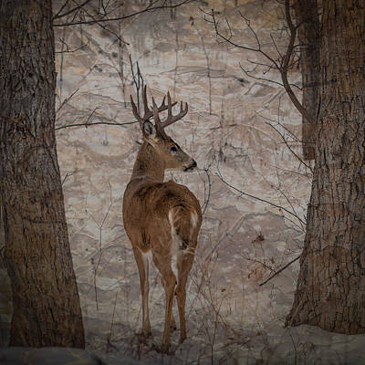 Photograph - Looking Back Buck by Patti Deters