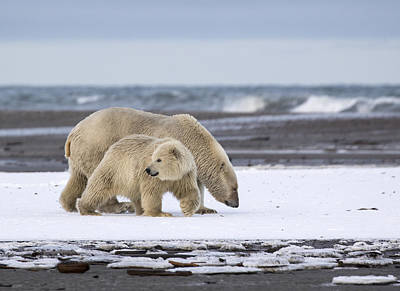Photograph - Looking Back In The Arctic by Cheryl Strahl