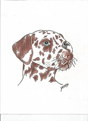 Dalmation Drawing - Looking by Daniel Yates