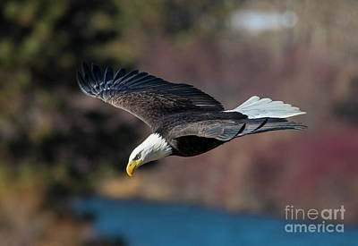 Birds Royalty-Free and Rights-Managed Images - Looking Down on the River by Mike Dawson