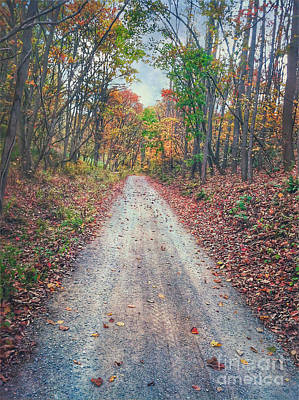 Photograph - Looking Down The Dirt Road by Kerri Farley