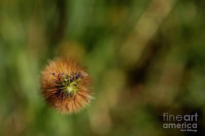Photograph - Looking Down.....by Reid Callaway by Reid Callaway
