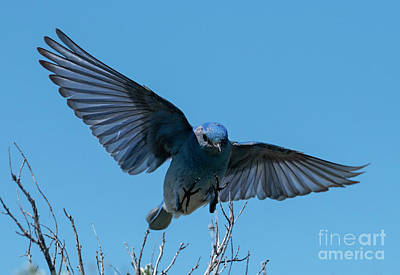 Mountain Royalty-Free and Rights-Managed Images - Looking for a Landing by Mike Dawson