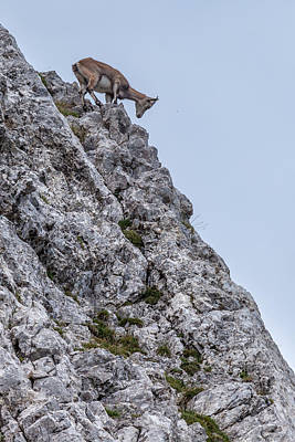 Wild Lucerne Photograph - Looking For A Meal by W Chris Fooshee