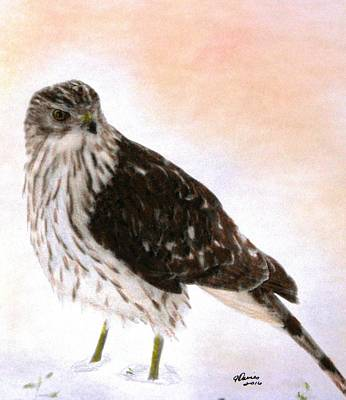 Red Tail Hawks Drawing - Looking For Breakfast by Angela Davies