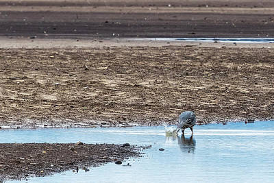 Photograph - Looking For Dinner by Belinda Greb