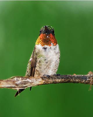 Hummingbird Digital Art - Looking For Flowers by Betty LaRue