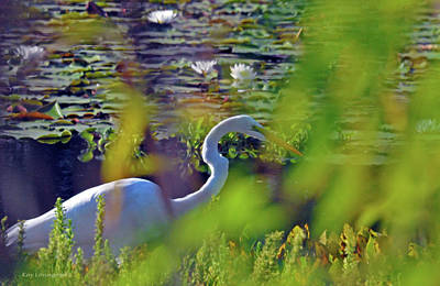 Photograph - Looking For Food by Kay Lovingood