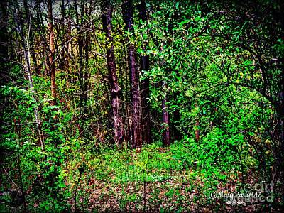 Photograph -  Looking For Goldilocks by MaryLee Parker