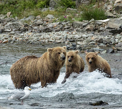 Photograph - Looking For Sockeye Salmon by Cheryl Strahl