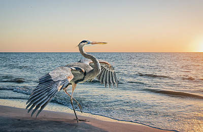 Looking For Supper Art Print by Brian Tarr
