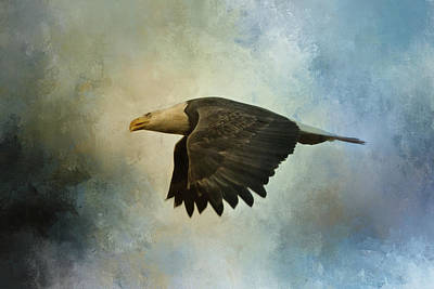 Photograph - Looking For The Sun Bald Eagle Art by Jai Johnson