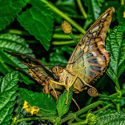 Photograph - Looking Into The Eyes Of A Butterfly by Nick Zelinsky