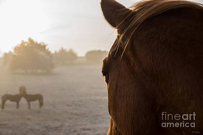 Photograph - Looking Onward by Jennifer White