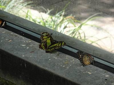 Photograph - Green Orange Butterfly Looking Onward by Mozelle Beigel Martin
