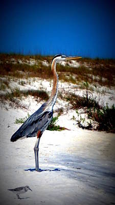 Photograph - Looking Out Over The Gulf by Laurie Pike