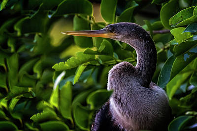 Photograph - Looking Over My Shoulder by Cyndy Doty