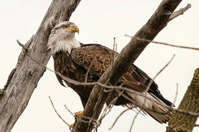 Photograph - Looking Over My Shoulder by Steve Stuller