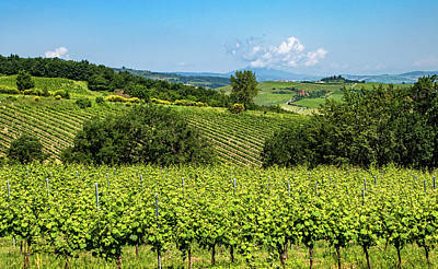 Photograph - Looking Over The Vineyards by Carolyn Derstine