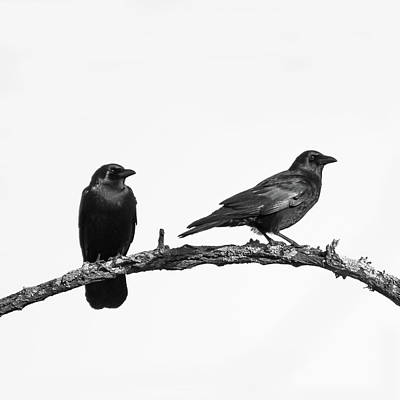 Two Crows Photograph - Looking Right Two Black Crows On White Square by Terry DeLuco