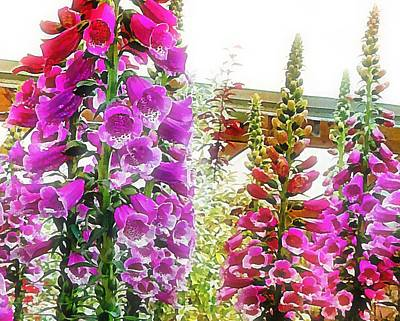 Photograph - Looking Through Hollyhocks by Dorothy Berry-Lound