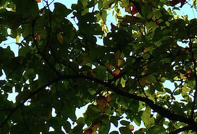 Photograph - Looking Thru The Leaves Six by Robert J Sadler