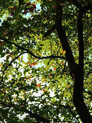 Photograph - Looking Thru The Leaves Three by Robert J Sadler