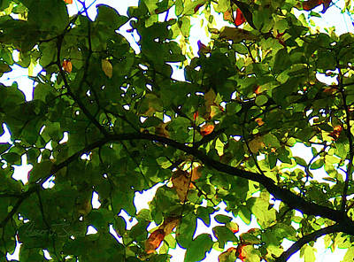 Photograph - Looking Thru The Leaves Two by Robert J Sadler
