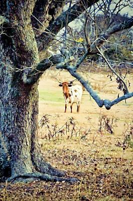 Pasture Scenes Digital Art - Looking Thru The Old Pecan by Jan Amiss Photography