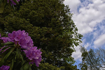 Photograph - Looking To The Sky by Kuni Photography