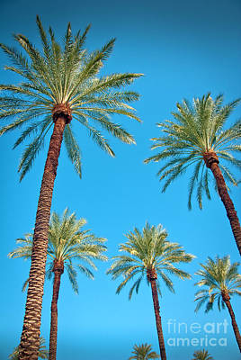 Photograph - Looking Up At Palm Trees by David Zanzinger