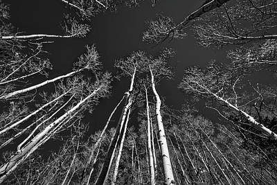 Photograph - Looking Up At The Aspens by Stuart Litoff